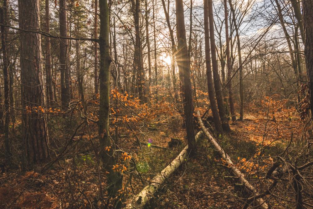 Darßer Urwald bei Prerow auf dem Darß. Foto: Kerstin Bittner