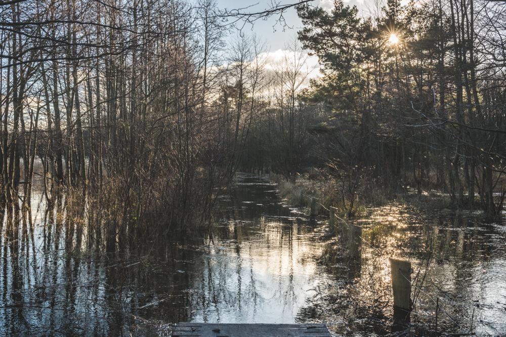 Überschwemmter Bohlenweg, Darßer Ort bei Prerow auf dem Darß. Foto: Kerstin Bittner