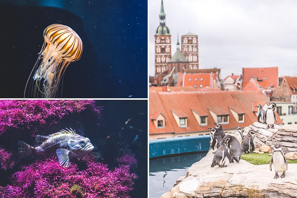 Ozeaneum in Stralsund. Foto: Kerstin Bittner