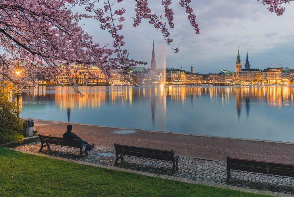 Kirschblüte an der Binnenalster in Hamburg. Foto: Kerstin Bittner