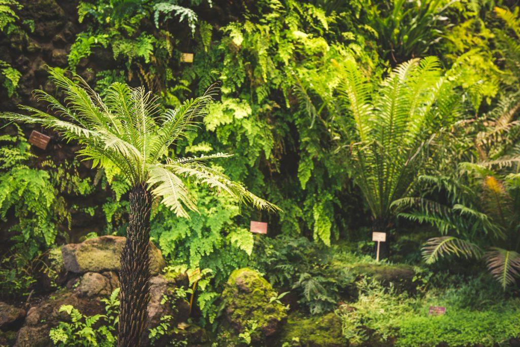 Farnhaus in den Tropengewächshäusern der Universität Hamburg im Park Planten und Blomen. Foto: Kerstin Bittner