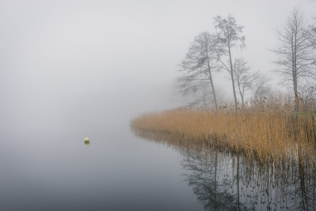 Schilfufer am Schaalsee im Nebel. Foto: Kerstin Bittner