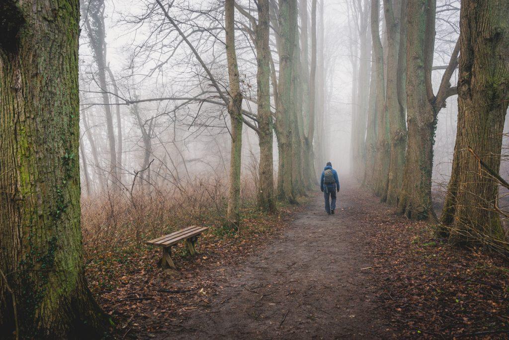 Wanderweg am Schaalsee im Nebel. Foto: Kerstin Bittner