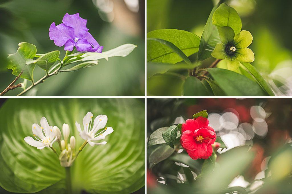 Verschiedene Blüten in den Tropengewächshäusern der Universität Hamburg im Park Planten und Blomen. Foto: Kerstin Bittner
