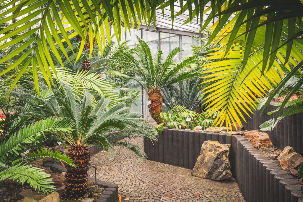 Palmfarnhaus in den Tropengewächshäusern der Universität Hamburg im Park Planten und Blomen. Foto: Kerstin Bittner