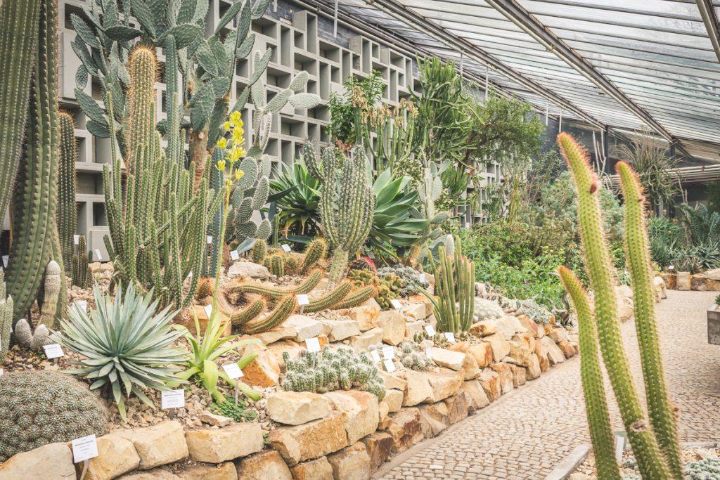 Sukkulentenhaus in den Tropengewächshäusern der Universität Hamburg im Park Planten und Blomen. Foto: Kerstin Bittner