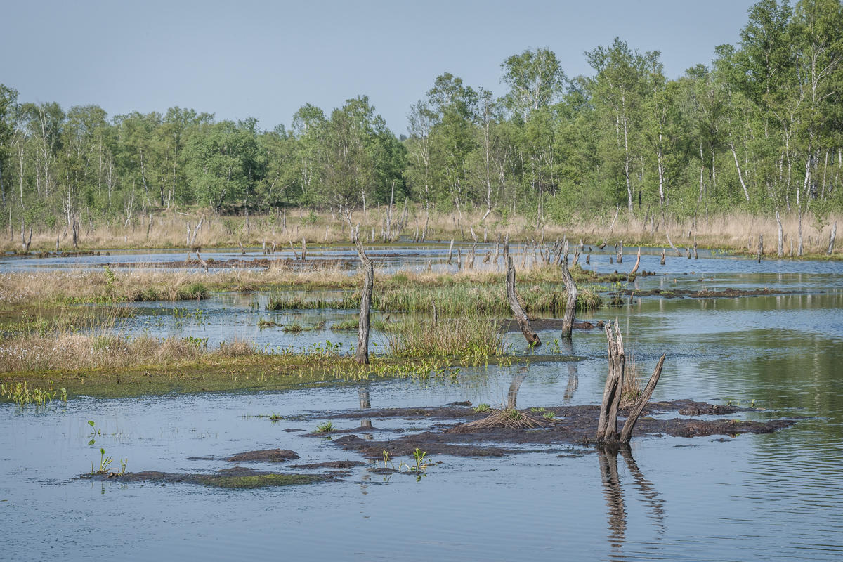 Moorsee im Naturschutzgebiet Wittmoor. Foto: Kerstin Bittner