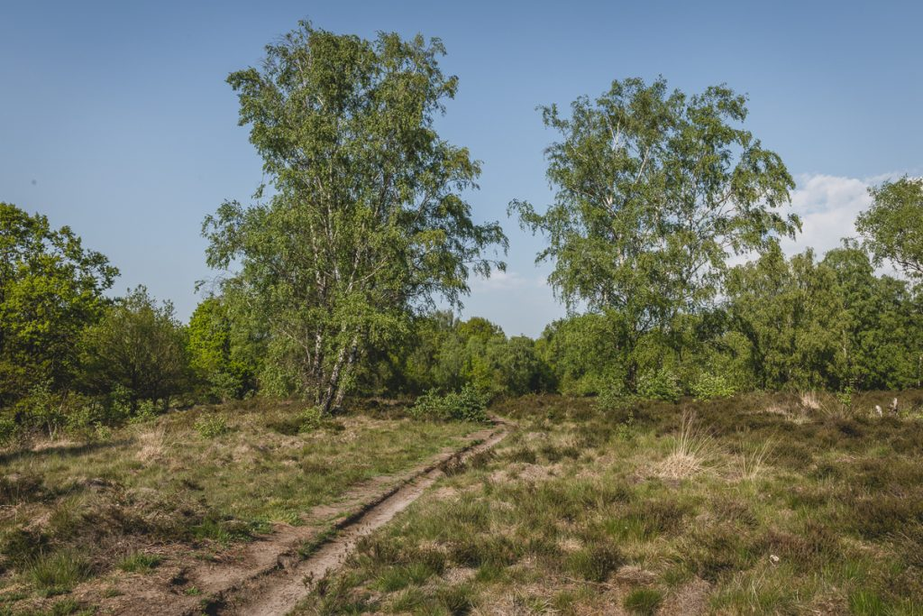 Heidelandschaft im Naturschutzgebiet Wittmoor. Foto: Kerstin Bittner