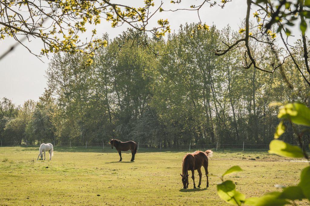 Pferdekoppel im Naturschutzgebiet Wittmoor. Foto: Kerstin Bittner