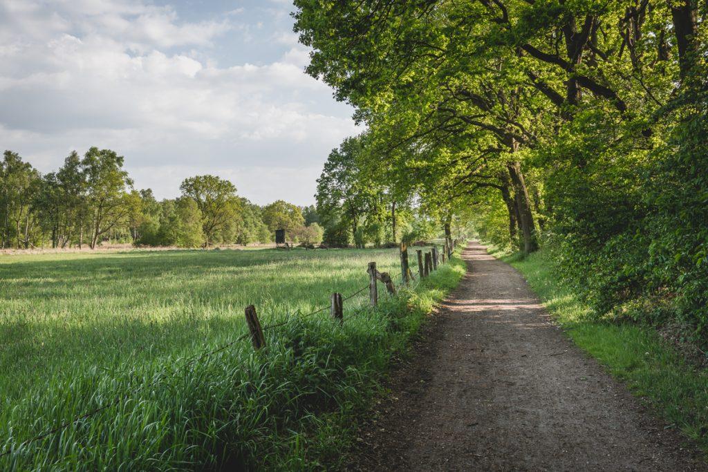 Weg im Naturschutzgebiet Wittmoor. Foto: Kerstin Bittner