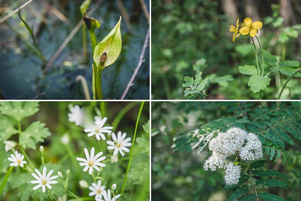 Pflanzen im Naturschutzgebiet Wittmoor. Foto: Kerstin Bittner
