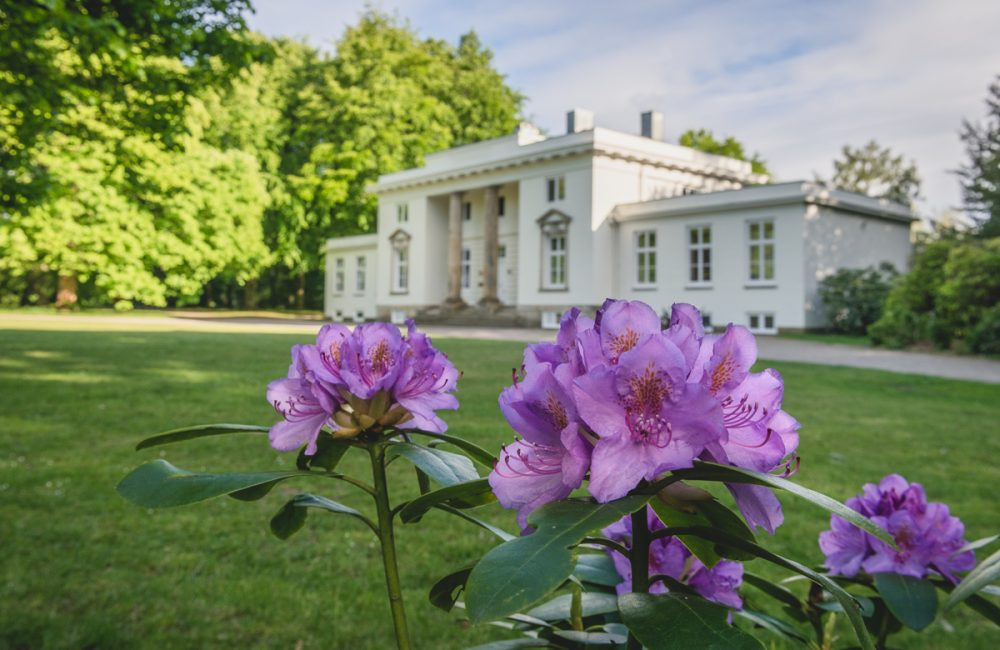 Blühender Rhododendron im Hirschpark in Hamburg. Foto: Kerstin Bittner