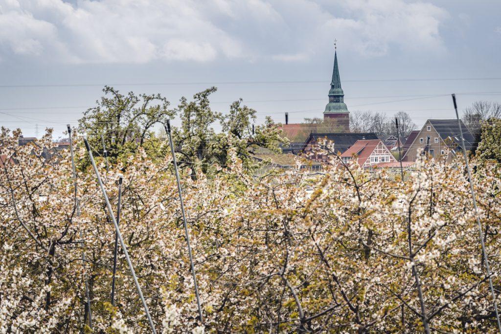 Obstbaumblüte im Alten Land mit Blick auf das Dorf Steinkirchen. Foto: Kerstin Bittner